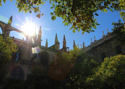 Der Orangenbaumgarten in der Kathedrale