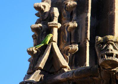 Schau immer wieder in die Luft, den in Sevilla leben ganzjährig Kanarienvögel.