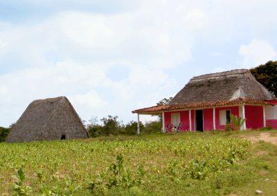 Tabakbauern Valle de Vinales